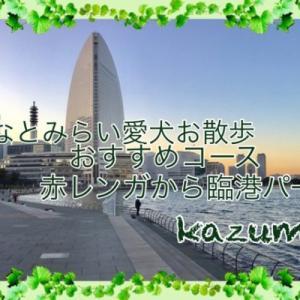 みなとみらい愛犬お散歩おすすめコース横浜赤レンガ倉庫・臨港パーク