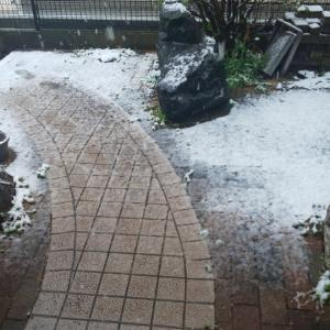 雪、思ったより降った休日