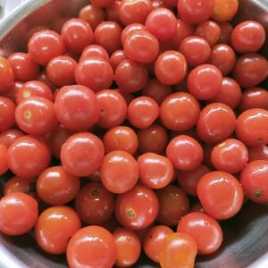 昨日の収穫したプチトマトを加工する日記