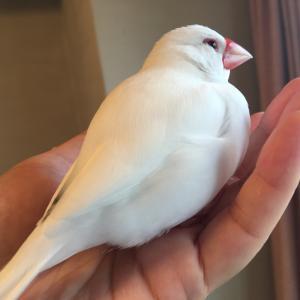 文鳥色のダイアリー