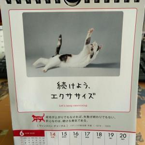 今週のネコカレンダー。
