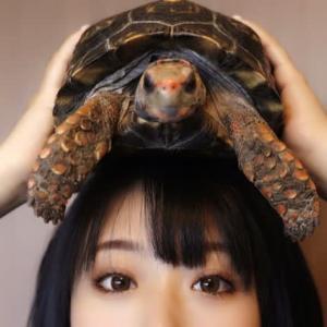 爬虫類が好き!2