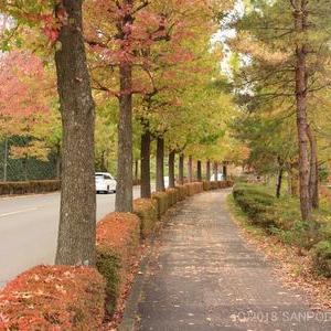 街路樹の葉