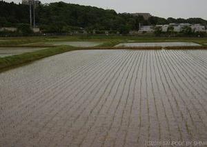 農業用水路と水門
