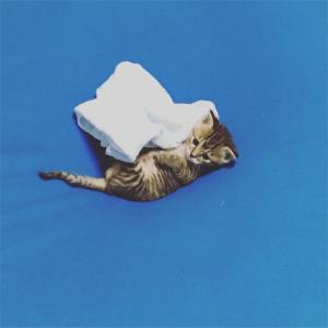 子猫の便秘③