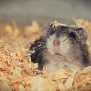長期出張中に嫁から「ネズミ飼い始めた」って連絡来てたから「増えるから雄雌分けろよ」と言ってたんだけど、帰宅したら20匹にまで増えてて…
