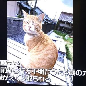 【三重】「きれいにおなかを洗って、内臓を出してあって...」 猫が変死、鋭利な刃物で内臓えぐり取ったか 警察が捜査