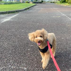のんびり散歩で幸せ感UP