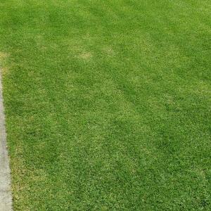 芝刈り(35回目)