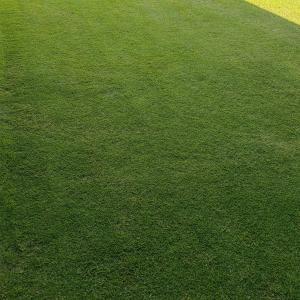 芝刈り(38回目)=刈り止め2回目w