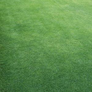 芝刈り(7回目)