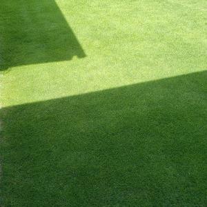 芝刈り(11回目)