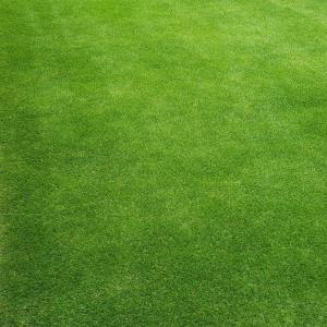 芝刈り(12回目)
