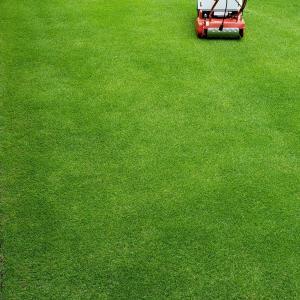 芝刈り(13回目)