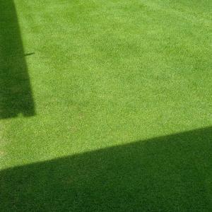 雨の隙間で芝刈り(15回目)
