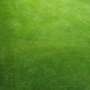 芝刈り(16回目)