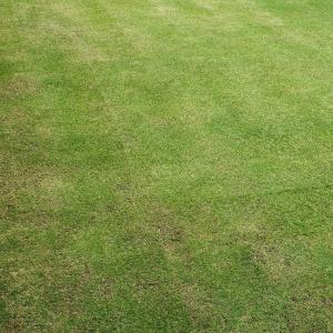 サッチング&芝刈り(19回目)