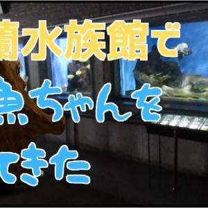 北海道でおすすめ 地元の市立室蘭水族館でお魚ちゃんを見てきた