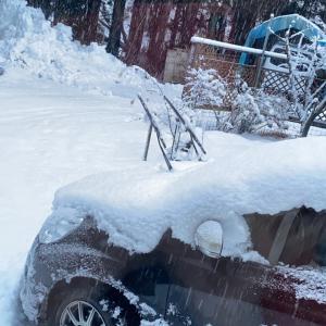 気になる雪の量は、