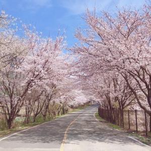 梁山から桜だより