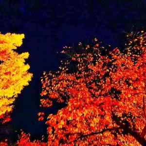 あでやか☆慶州の紅葉