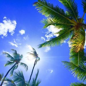 地球で鬼ごっこ、見つけたら100万円、佐々木さんのお手伝いをする仕事の面接で、ハワイへ行ったシェアメイトさん
