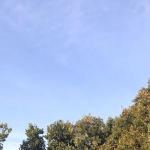 完全に秋になりました