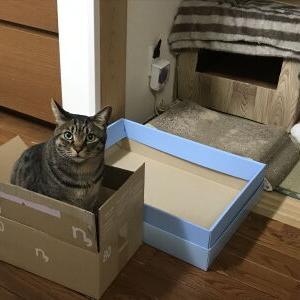 そして、今日も、箱。