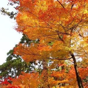 続・そろそろ京都にも行きたいな