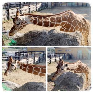 手元あたたか〜♪と、 福山市立動物園 (2020.11.15)
