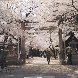 名古屋の桜の名所|那古野神社(なごやじんじゃ)と名古屋東照宮