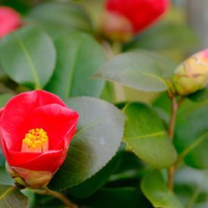 名古屋城でちょっと早いお花見