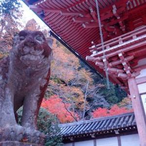 京都神社巡り|秋の鞍馬寺へ
