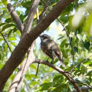 今日のお散歩-017:野鳥図鑑買って鳥を見に行った