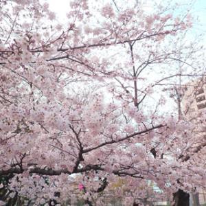 今日のお散歩-018:病院でお花見