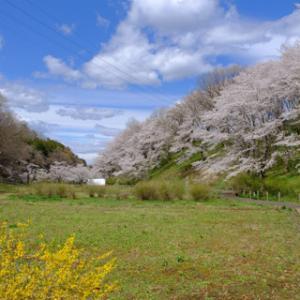 春の秩父旅・1日目:羊山公園芝桜まつり
