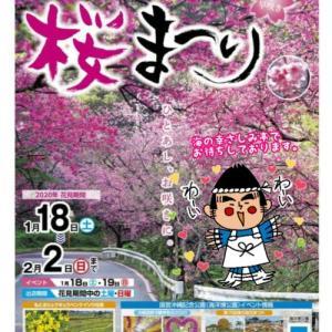 日本一早い🌸もとぶ八重岳桜祭り&花見が開催されました!