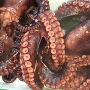 島ダコの刺身がさらに美味しくなる♡食べ方ご提案!