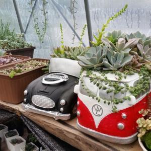 ブロウメアナの増やし方をかえた&寄せ植えを解体したい気持ち…(。× ×。)