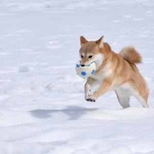 犬の冷え性改善は服よりも食べもので!〜ドッグペアレンティング〜