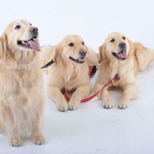 12月16日 〜犬ごはん選びにもう迷わなくなる〜セミナー開催します!