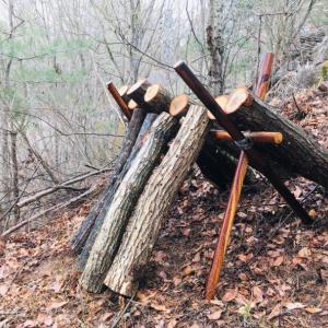 原木椎茸作り開始