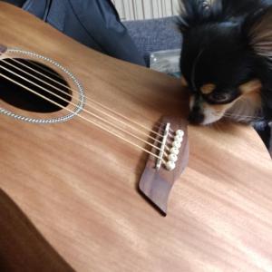マダム、Sヤイリのミニギターを買う。