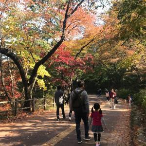紅葉を見に行こうとソウルは南山に行ってきました