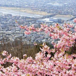 桜色の山腹から、橋を渡るVSEを霞の中に遠望
