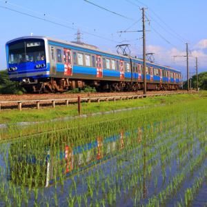 6月の田んぼに眩しく映る駿豆線を