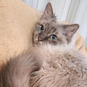 我が家の猫が膀胱炎になった時の経過と治療費