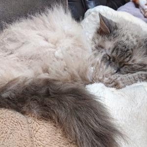 猫同士の仲が悪くても強い方が寝てると平和