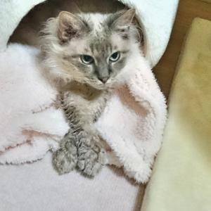 猫の飲み水対策をした結果【冬の飲み水】