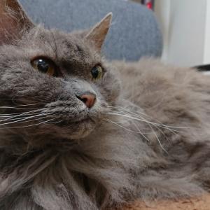 【猫の膀胱炎】全然抗生剤が効かない!耐性菌になってしまった大腸菌の話